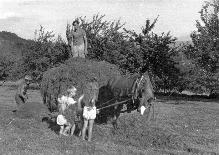 Ernteeinsatz Kraschonig-Wiese 1943