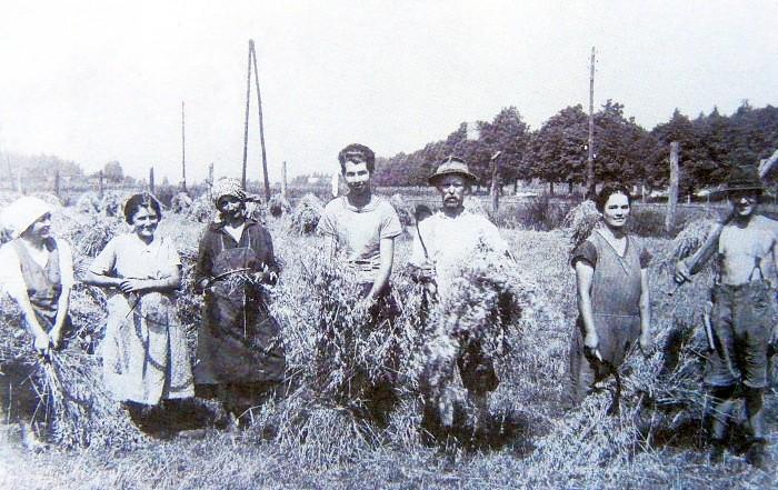 Haferernte auf Gut Walterskirchen ca. 1926 (Foto S. Schneidinger)